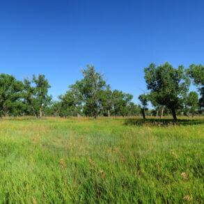 Pearce Ranch