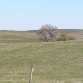 Pilgrim Creek Ranch