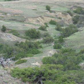 Little Sheep Mountain Ranch