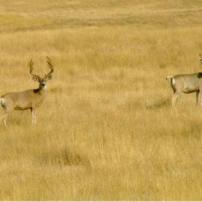 Mahoney Creek Ranch