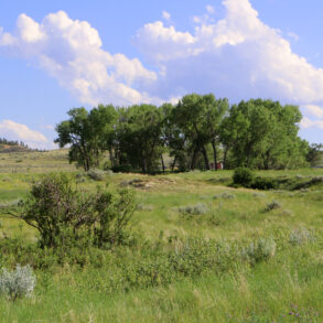 Basin Creek Ponderosa
