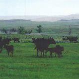 EV Ranch